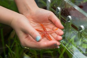 A pair of female hands cup a pool of ocean water into their hands, with an orange sea-star resting in it.