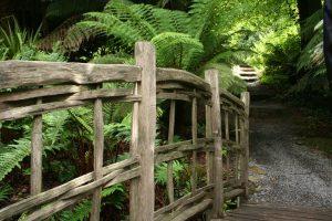 Wooden Bridge with tree surroundings