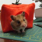 Truffle the hamster popping her head out of a machine-sewn felt pumpkin house
