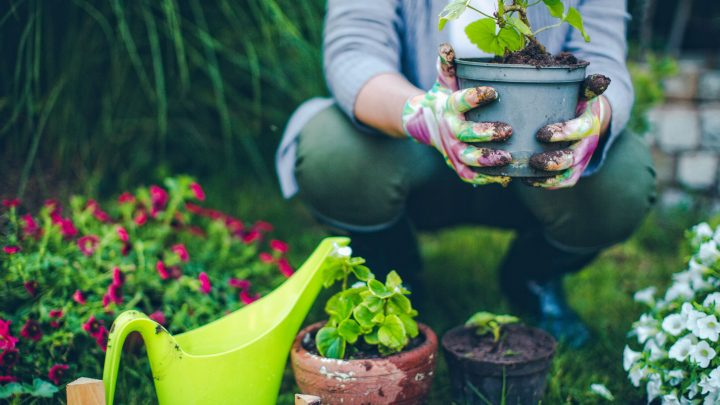 Image of a woman wearing gardening gloves and holding a potted plant, surrounded by other plants in a garden.
