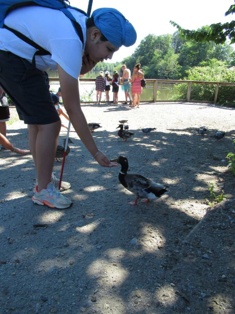 a teen with a white cane bends down to feel a duck. The duck's beak is right in his hand, eating the food.